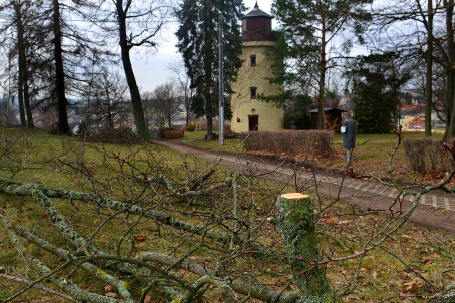 Wenn auf privaten Grundstücken Bäume gefällt werden sollen, können Kommunen jetzt strengere Regeln erlassen. In Hainichen bleibt es bei der bisher geltenden Holzschutzsatzung, die auch den Rückschnitt von Bäumen regelt, wie jüngst rund um die Camera obscura durch den Bauhof erledigt.