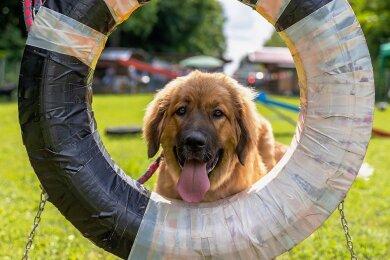 Mala von der Saaleaue war mit sechs Monaten die jüngste Teilnehmerin beim Bärenhundetreffen.