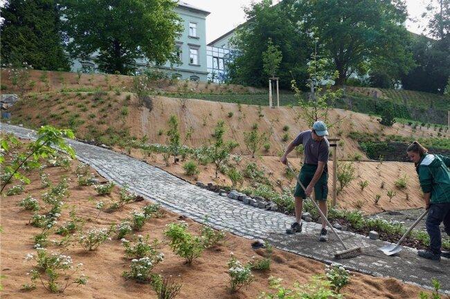 Frank Schreiter und Klara Kluge füllen die Fugen zwischen den Pflastersteinen des neuen Weges, der durch den Seminargarten führt.