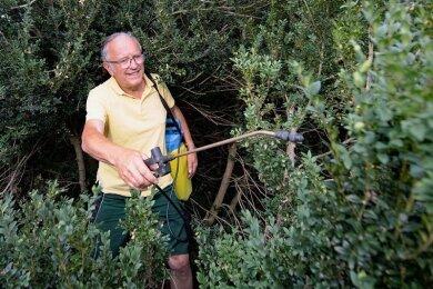 Erst Ausschneiden und dann Sprühen gegen den Zünsler, der die Buchsbäume schon mächtig ausgedünnt hat: Wolfgang Friebel, früher Gartenmeister von Schloss Pillnitz, verwendet dafür das natürlich vorkommende Bakterium Xentari.