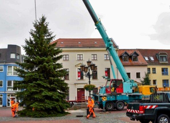 Mit einem Kran wird die rund zehn Meter hohe Fichte auf dem Crimmitschauer Markt in Position gebracht.