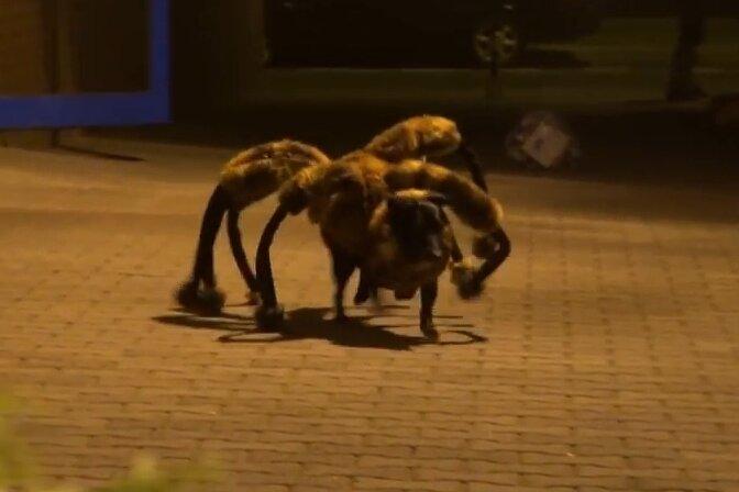 Riesenspinnen-Hund ist meistgeklicktes Youtube-Video des Jahres