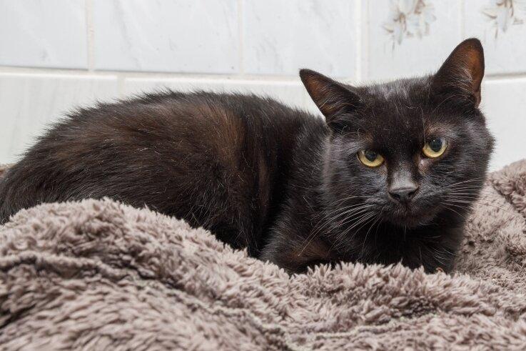 Kater Utha kam als Fundtier ins hiesige Tierheim und sucht ein neues Zuhause. Vierbeiner mit schwarzem Fell haben es dabei oft schwerer.