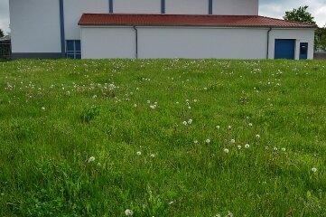 Auf dieser Wiese hinter dem Sportforum im Hainichen soll ein weiterer Parkplatz mit 40 Stellflächen entstehen.