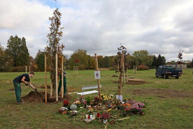 Mitarbeiter des Garten- und Friedhofsamtes setzten die zehn Bäume in die Erde.