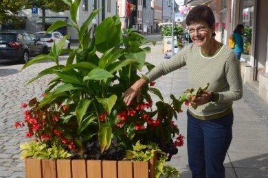 """Buchhändlerin Cornelia Horn an """"ihrem"""" Pflanzkübel: Sie ist eine von acht Paten für das städtische Grün."""