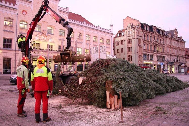 Am Dienstag wurde der Weihnachtsbaum auf dem Zwickauer Hauptmarkt zerkleinert und abtransportiert.