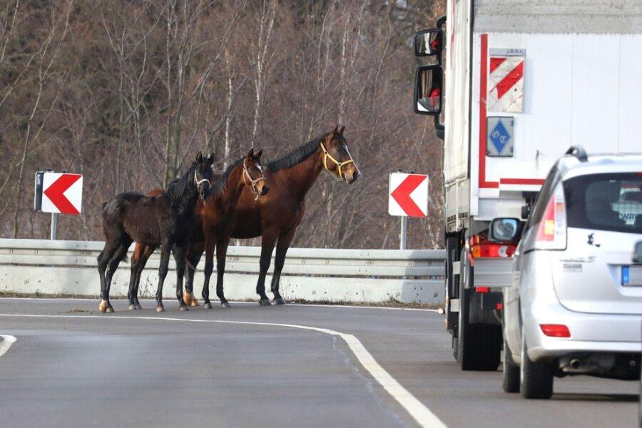 Tierischer Besuch auf der Bundesstraße