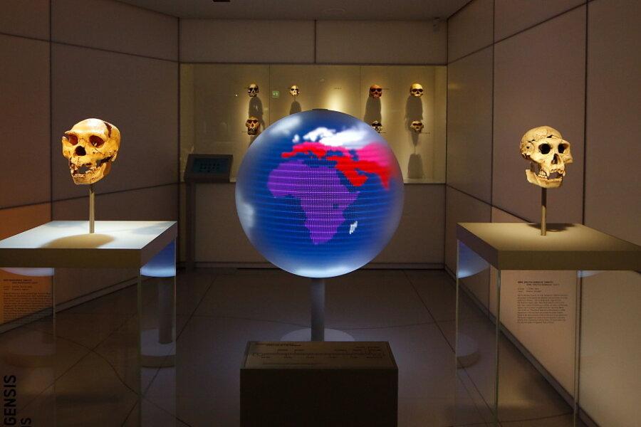 Archäologiemuseum Smac in Chemnitz öffnet ab Dienstag wieder