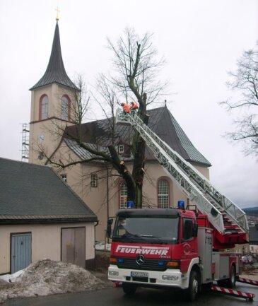 """<p class=""""artikelinhalt"""">Stadtbauhof und Feuerwehr haben am Freitag bei der Fällung erneut Hand in Hand gearbeitet.</p>"""