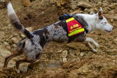 Carola Deppler hat Yuuwa zum Rettungshund ausgebildet. In Zwickau sollen nun weitere Artgenossen folgen.
