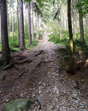 Diese Strecke im Wald bei Siebenhöfen, die offenbar Biker nutzten, hat ein Leser fotografiert.