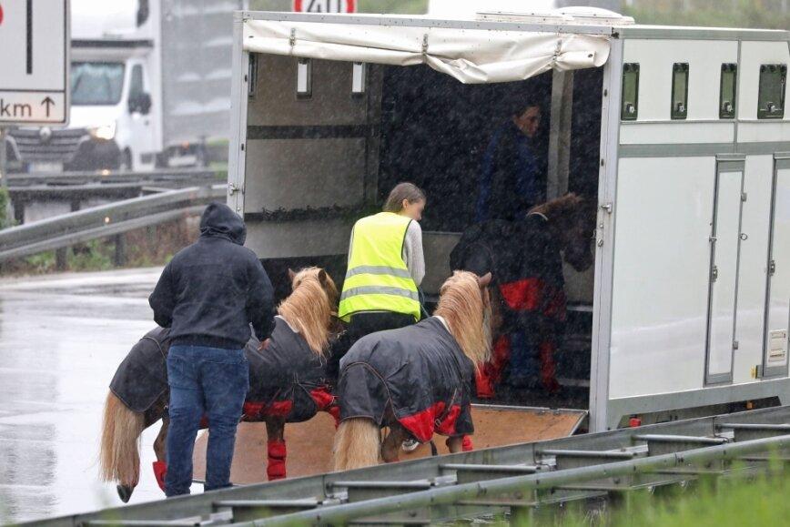 Transporter fängt Feuer: Kleinpferde auf der Autobahn bei Glauchau