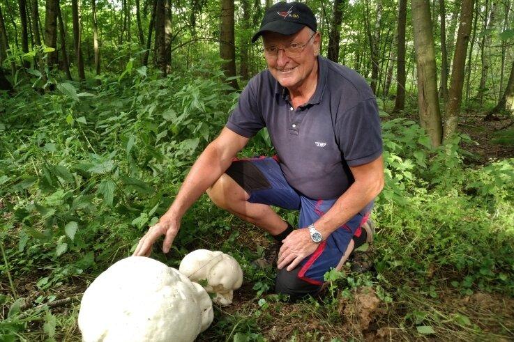 Etwa so groß wie ein Basketball ist der Riesenbovist, den Dietmar Schmuck im Wald zwischen Langenberg und Schwarzbach gefunden hat.