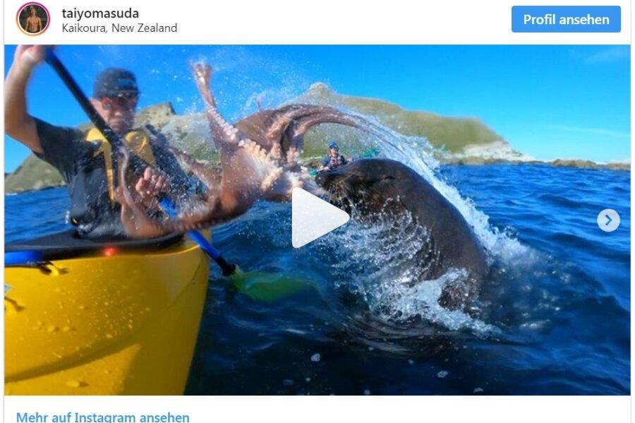 Robbe schleudert Paddler einen Tintenfisch ins Gesicht