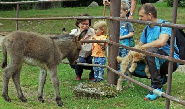 Die kleine Eselstute scheint Kinder zu mögen. Ohne Scheu kommt sie an den Zaun, das begeistert auch diese Familie.