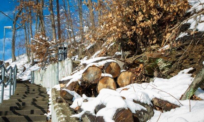 Die Stadt Flöha hat entlang des Marktsteiges aus Sicherheitsgründen im Herbst eine Reihe geschädigter Bäume fällen lassen.