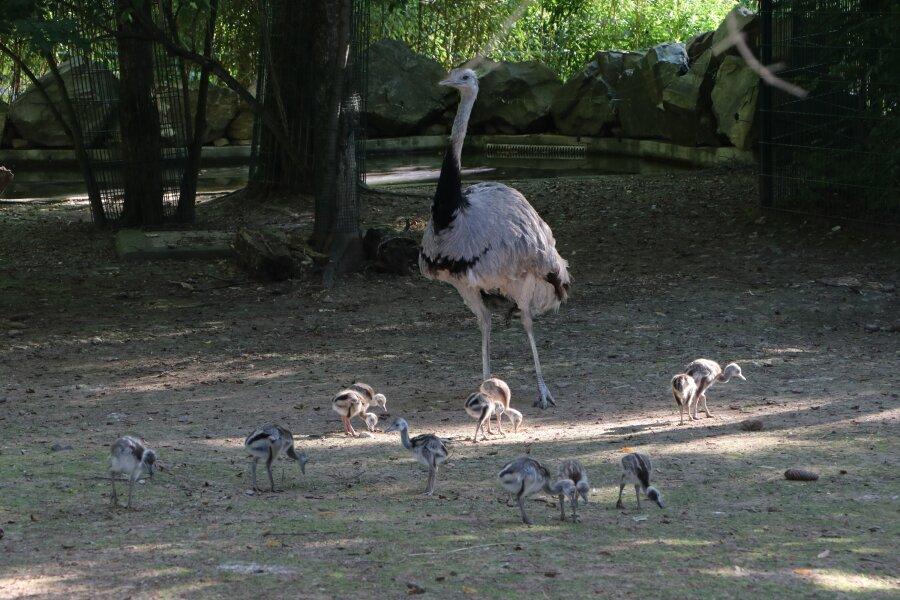 Vogelnachwuchs im Tierpark Chemnitz