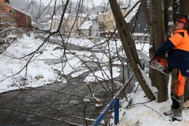 Rigo Unger, Vorarbeiter bei der Landestalsperrenverwaltung, und seine Kollegen haben nun die ersten Bäume geschnitten, deren Wurzelballen die Ufermauern bereits stark zertrieben haben.