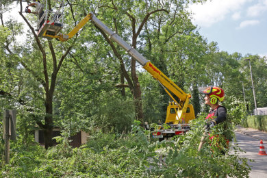 Der Auerbacher Naturschutzhelfer Michael Thoß bezeichnet die in Auerbach stattfindenden Baumpflegearbeiten als verwerflich.