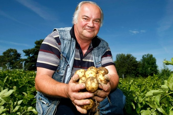 """<p class=""""artikelinhalt"""">Mit 14-tägiger Verspätung haben es die Frühkartoffeln der Sorten Solist und Juwel, die Hansjörg Hänig hier auf einem 10-Hektar-Schlag der Lippersdorfer Land GmbH zeigt, auf die richtige Größe gebracht. In der nächsten Woche werden sie geerntet. </p>"""