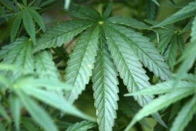 Das Startup Demecan ist nach eigenen Angaben der einzige unabhängige deutsche Produzent von medizinischem Cannabis.
