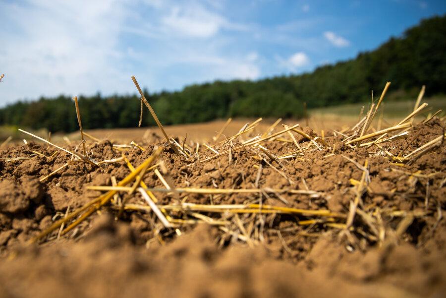 Dürre verursacht bei Landwirten 300 Millionen Euro Schaden
