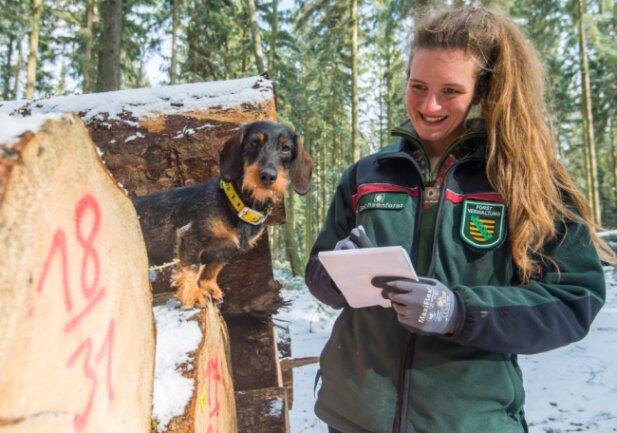 Anne Borowski ist die neue Revierförsterin. Rauhaar-Dackelhündin Inge wird zum Jagdgebrauchshund ausgebildet.