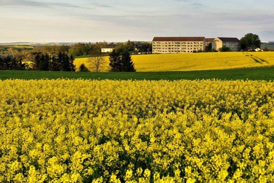 Blühende Rapsfelder sorgen für gelbes Farbenspiel