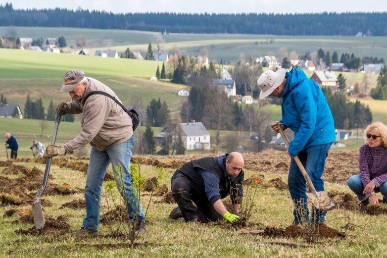 Naturschützer pflanzen in Rübenau Wildsträucher