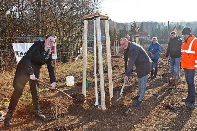Sträucher und Bäume gepflanzt