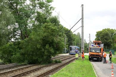 Auf der Linie 1 stürtze ein Baum auf die Gleise.