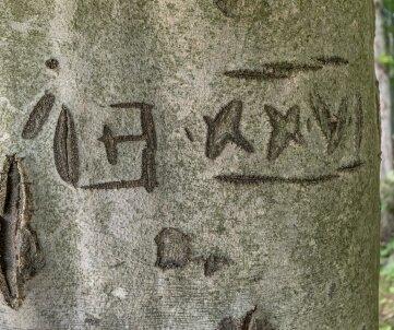 Mysteriöse Einritzungen an einer Buche im Wald an der Mönchszeche. Bislang ist nicht geklärt worden, was diese alten Zeichen genau bedeuten, erklärt Steffen Ulbricht.