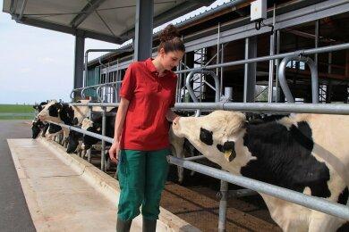 Annemarie Flach ist in der Agrargenossenschaft Rotschau für das Jungvieh zuständig. Wie man sieht, mögen die Tiere die junge Frau.