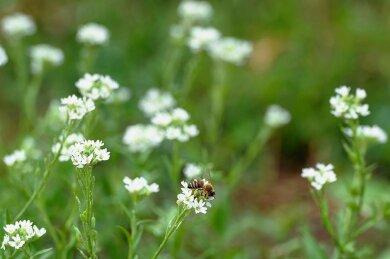 Zum Klimaschutz in der Landwirtschaft soll auch der Anbau von Wildblumen gehören.