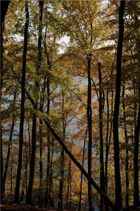 Buchenwälder wie hier in der Feldberger Seenlandschaft in Mecklenburg-Vorpommern kamen erst vor 5000 Jahren langsam nach Mitteleuropa zurück.
