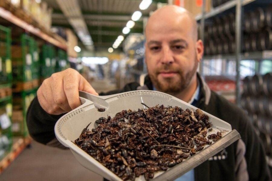 Die Mitarbeiter der Wiederauer Firma Almeva Deutschland GmbH, einem Anbieter für Abgastechnik, müssen derzeit täglich Käfer zusammenkehren - so wie im Bild Martin Wisinger.