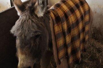 Miniesel Chuck musste in den Pferdestall umziehen. Dort ist es etwas wärmer.