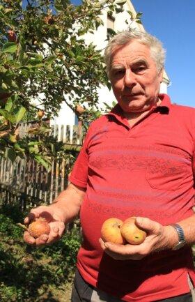 Bis zu zehn Zentner Äpfel erntet Helmut Singer in guten Jahren an seinen acht Apfelbäumen. Diesmal sind es nur ein paar Handvoll Äpfel. Die wenigen Früchte der Sorte Cox Orange faulen zudem schon am Baum.