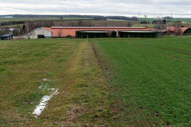 Auf diesem Feld am Hauptgut in Königshain will die Genießergenossenschaft einen Schweinestall errichten.