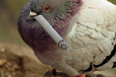 Kippenkonsum: wie der Mensch, so das Tier.