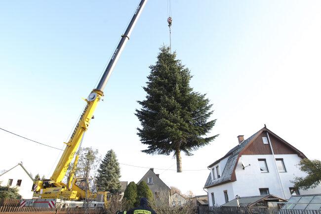 Die Nordmanntanne für den Plauener Weihnachtsmarkt 2019 ist zwölf Meter hoch.