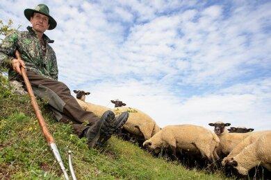 Der Beruf ist sein Leben: Schäfer Michael Ulsamer mit seinem Schäferstab und den Schafen im Naturschutzgebiet Großer Weidenteich. Er trägt die Verantwortung für 600 Tiere.