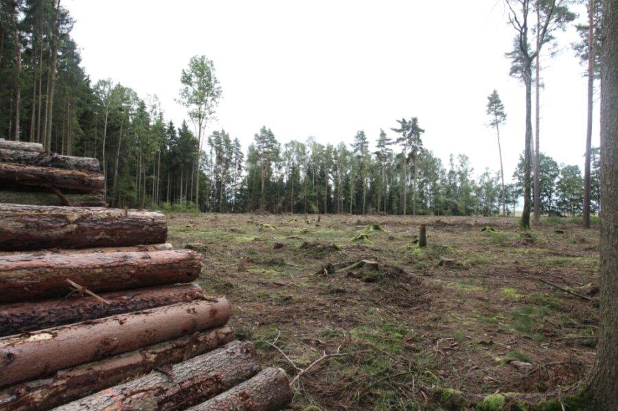 Kahlschläge, wie hier auf Fraureuther Flur, sind in den hiesigen Wäldern oft zu sehen. Grund sind Borkenkäferbefall, aber auch die zurückliegenden Dürrejahre, die die Bäume zusätzlich geschwächt haben.