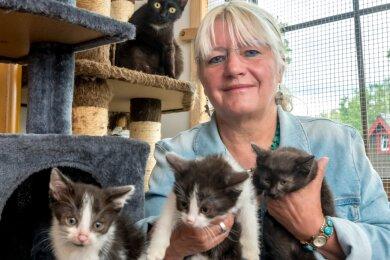 Angelika Reimann und eine weitere Helferin haben die Katzen aufgenommen und sie in sofortige ärztliche Behandlung gegeben. Mittlerweile konnten einige Tiere bereits wieder vermittelt werden.