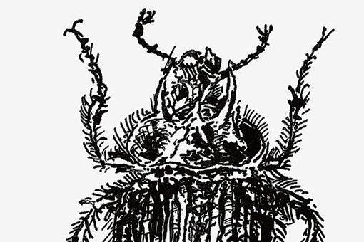"""Das Original der """"Souvenirs entomologiques"""" von Jean Henri Fabre war ohne Illustrationen erschienen. Die Vignetten für die erste deutsche Gesamtausgabe steuerte Christian Thanhäuser bei."""
