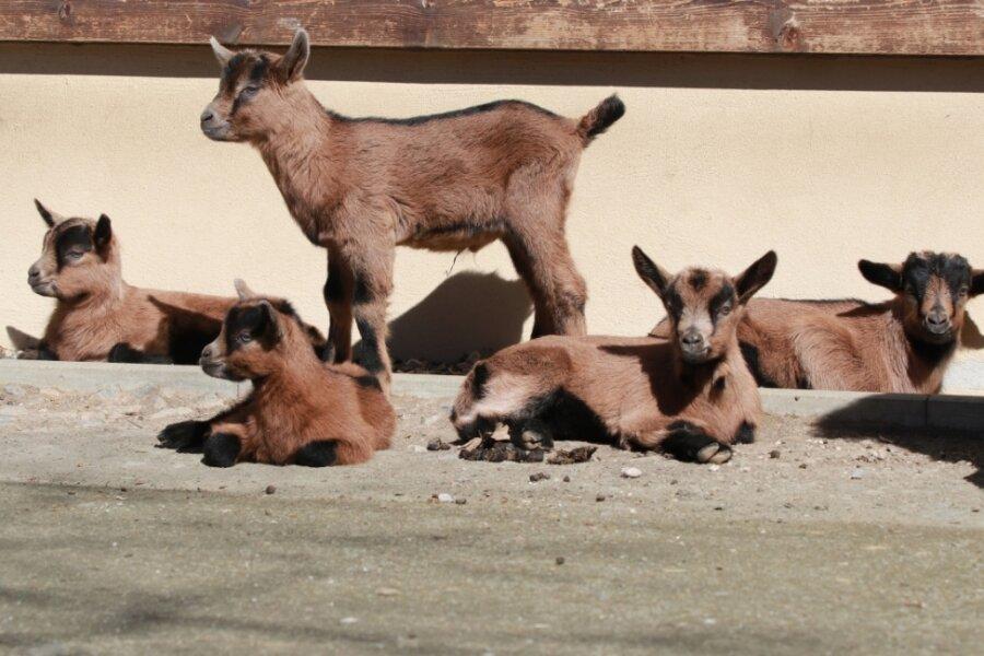 Neu in der Kinderstube des Tierparks und im Wildgatter Rabenstein