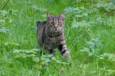 Symbolbild Katze