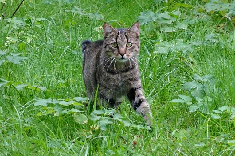 Katze durch Schussverletzung in Falkenstein gestorben