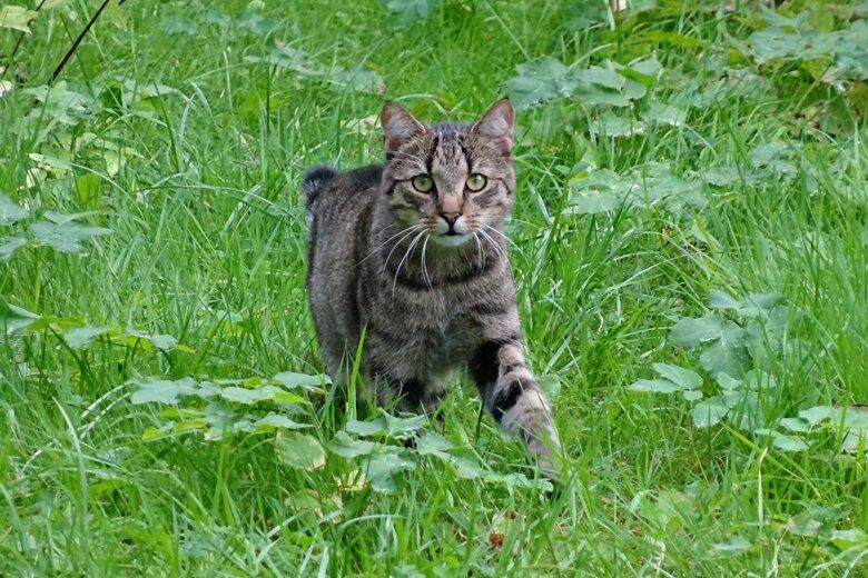 Unbekannter schießt mit Luftgewehr auf Katze
